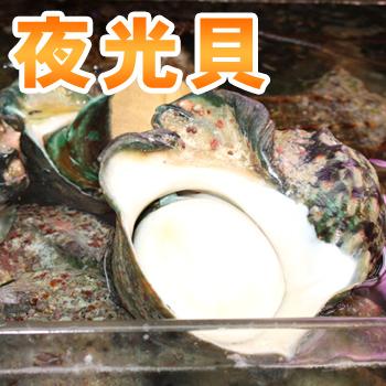 お刺身 バター焼きで 夜光貝 1.2kg~1.5kg ※殻付き オープニング 大放出セール 定番の人気シリーズPOINT ポイント 入荷