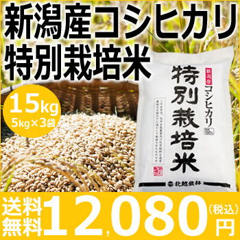 【米】新潟産コシヒカリ特別栽培米15kg(5kg×3袋)【30年産】【送料無料】新潟から産地直送、精米仕立をお届けします。
