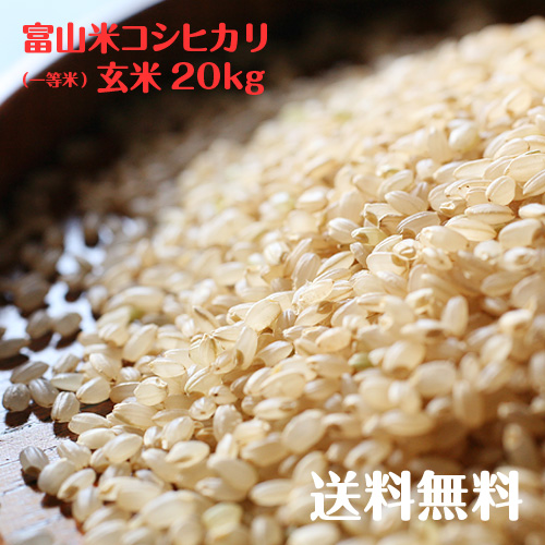 10kg2袋でお届けします 価格 当店オススメの銘柄米 富山県産コシヒカリ玄米 一等米 賜物 新米 20kg 令和3年度産