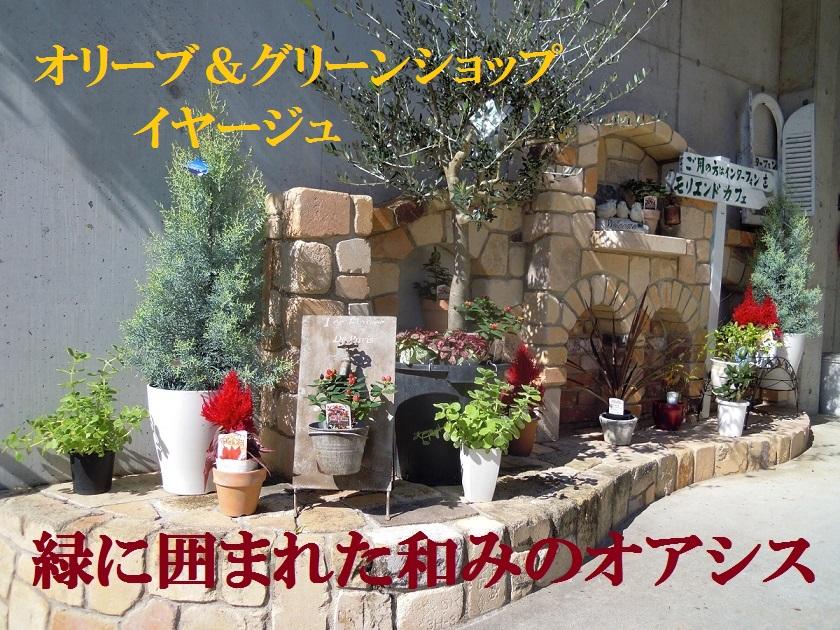 オリーブショップ イヤージュ:オリーブの木とオリーブオイル、そして観葉植物全般を取り扱っています。