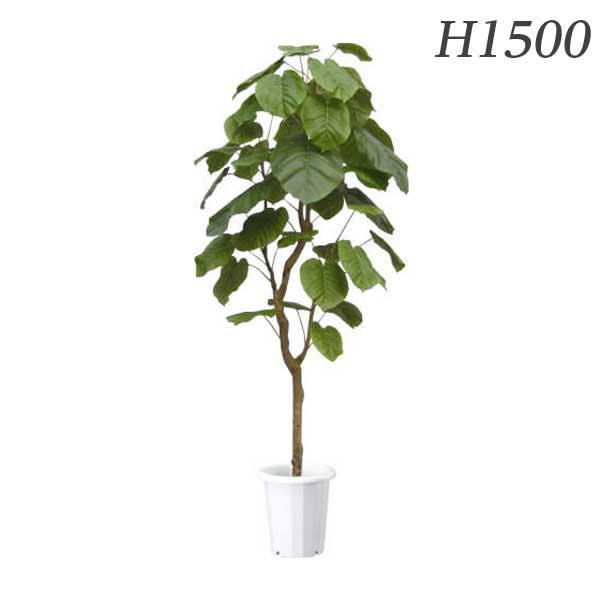 ライオン事務器 人工植物 ウンベラータ 約H1500mm ALU-001 576-27【代引不可】【送料無料(一部地域除く)】