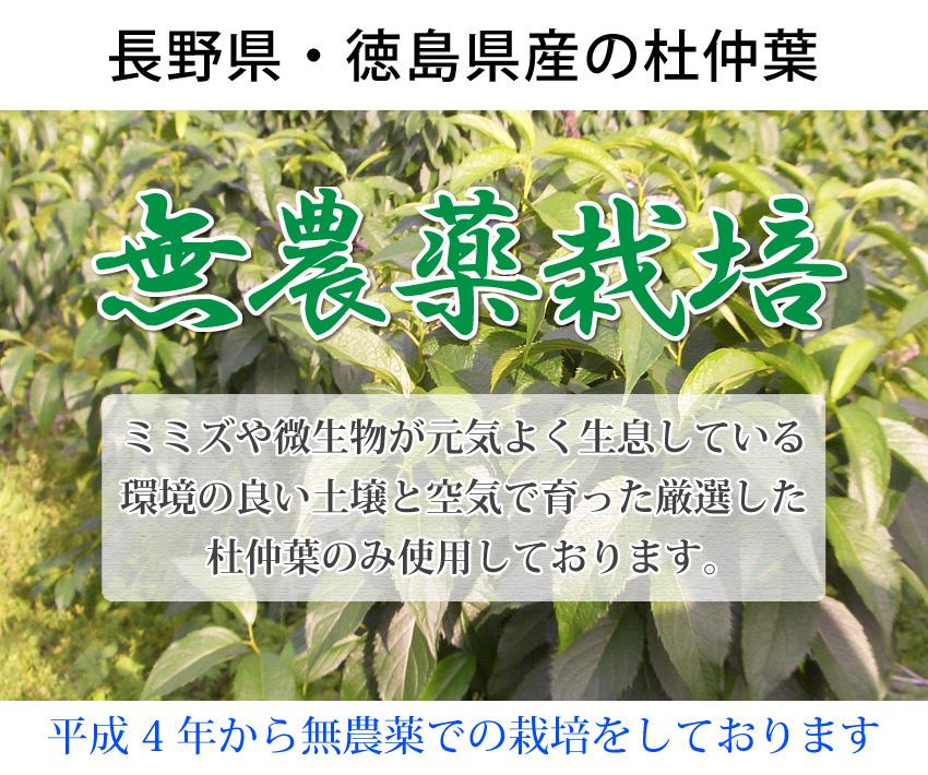 杜仲茶:国産/無農薬/村田食品の杜仲茶(1袋3g×30包)国産で無農薬のとちゅう茶メール便で杜仲茶(とちゅうちゃ)