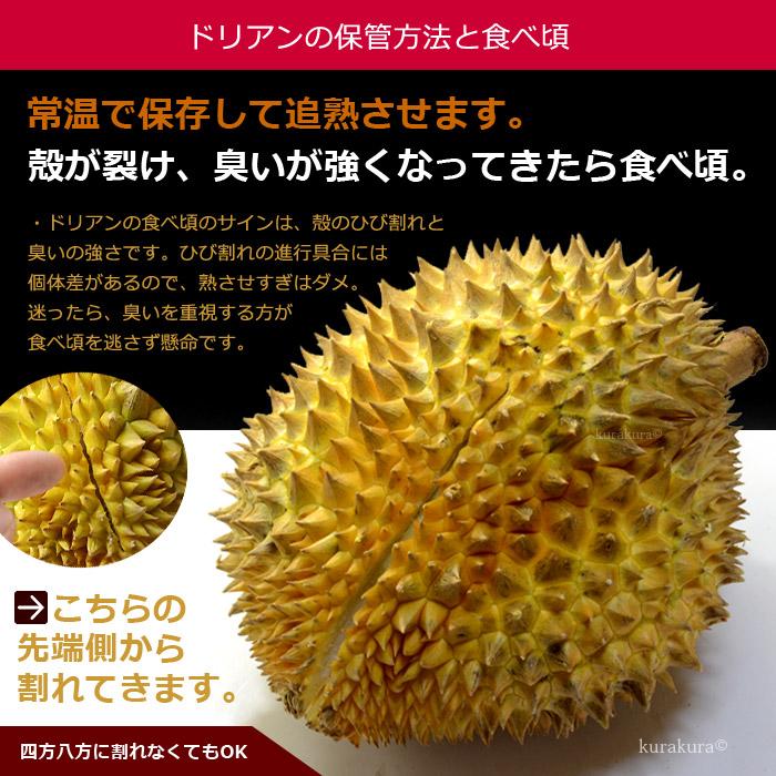 タイ産ドリアン1玉 南国フルーツ (7月下旬頃発送予定です。)