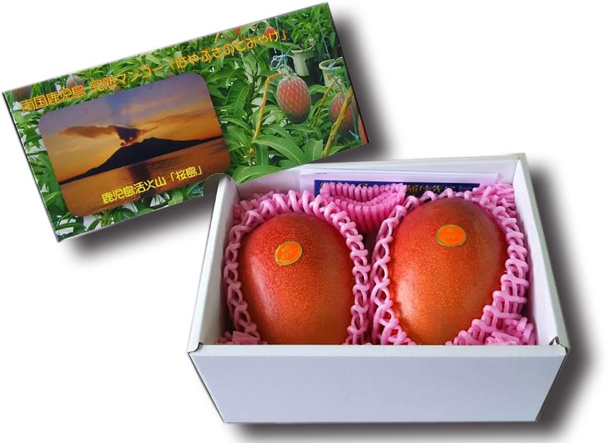 最佳芒果 2 件 (500 克),从鹿儿岛县鹿儿岛市九州熟芒果苹果芒果超级售超级售 10P01Jun14