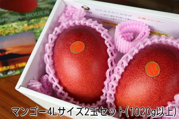 鹿儿岛县优秀成熟的芒果 2 L 超大 2 球 (约 1 公斤) 鹿儿岛九州成熟的芒果苹果芒果超级售超级售 10P01Jun14