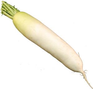 太くて長くて立派 甘みがあって美味しい大根です 大根すりが一品になります とレビューがついた 大根 長野産 ダイコン 北海道 春の新作シューズ満載 だいこん 1本 希望者のみラッピング無料