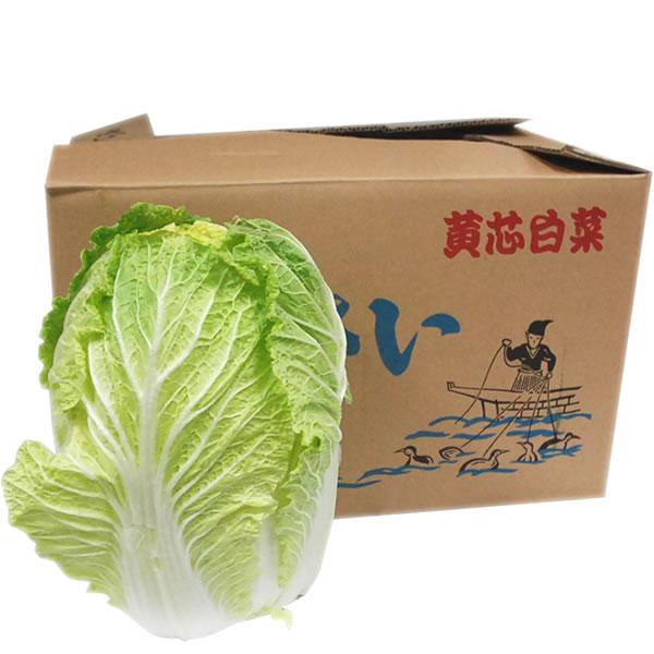 贈与 箱売り 白菜 はくさい ハクサイ 1箱 6本入り 国産 評判 長野 大分 業務用 大量販売 熊本