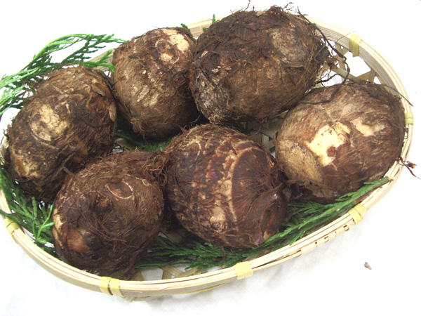 九州の安心 日本製 安全な野菜 里芋 さといも 1kg 熊本産 九州産 大分産 宮崎産 特価