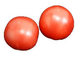 すぐれた栄養食材 九州の安心 安全な野菜 とまと 公式ストア トマト 九州 熊本 2Lサイズ×2玉 福岡産 大幅値下げランキング