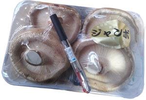 肉厚で味が濃い ボリューム満点のシイタケ ステーキ椎茸 ジャンボしいたけ 情熱セール 九州産 奉呈 1パック 大分 4枚~8枚