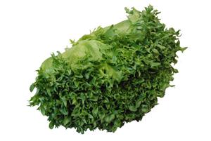 葉が厚く シャキシャキしている 流行のアイテム 倉庫 小さめにちっぎてサラダにするとたいへんおいしい サンドイッチや炒飯などサラダ以外でも大活躍間違いなし フリルアイス フリルレタス レタス 1株 サラダ野菜 長野産 れたす 佐賀 福岡