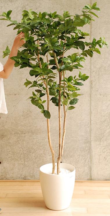 観葉植物 光触媒 レモン 高さ160cm インテリア 玄関 造花 人工観葉植物 【送料無料】