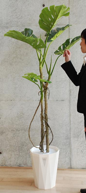 送料無料 観葉植物 インテリア 造花 光触媒 人工観葉植物 人工樹木 オフィス用 光触媒加工済み スプリットフィロ H1800mm 光触媒スプレー付き