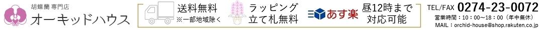 胡蝶蘭の専門店オーキッドハウス:胡蝶蘭の専門店オーキッドハウス☆高品質、新鮮な胡蝶蘭をいつでもお届け♪
