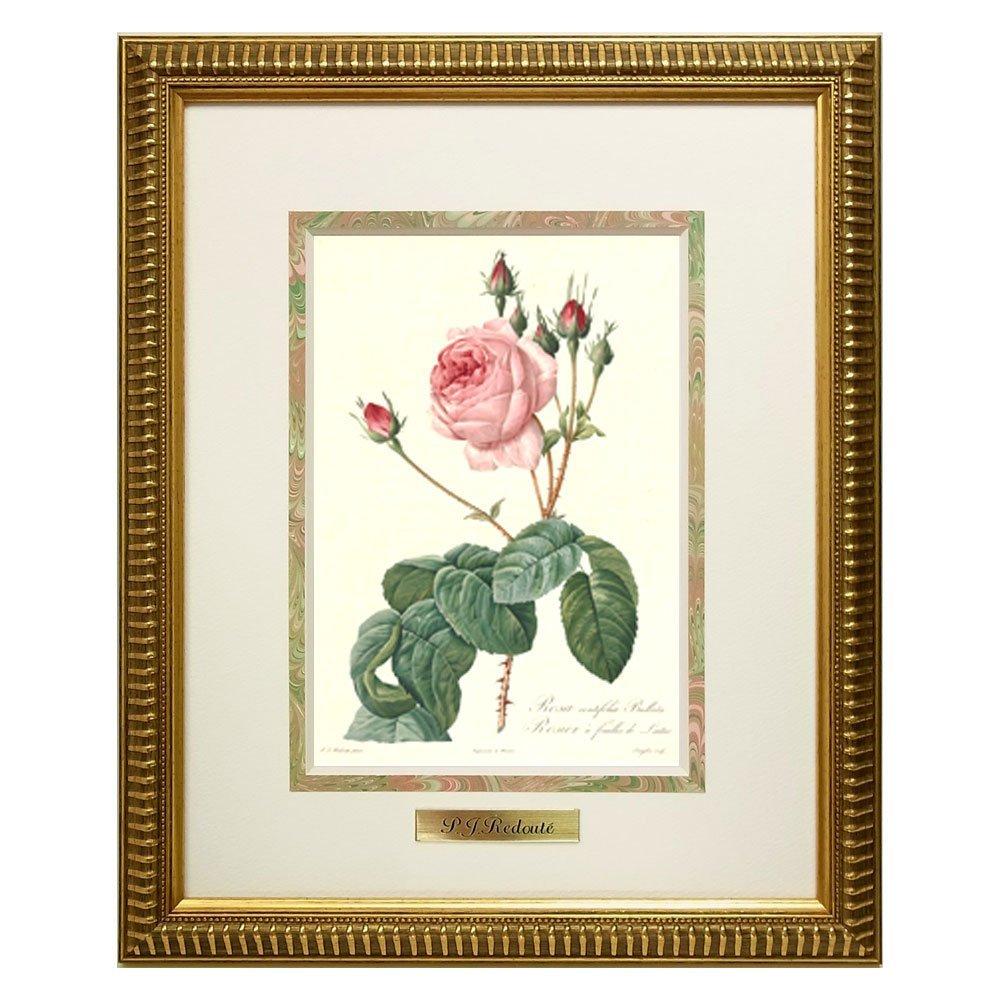 ルドゥーテ バラ図譜より 複製画 縮小版 『ロサ・ケンティフォリア・ブラータ』RS-I 薔薇/ローズ/絵画/宮廷画家/販売