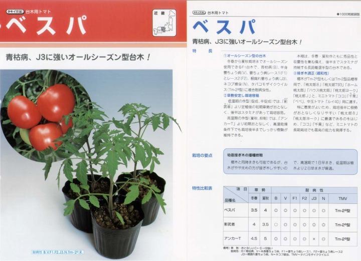 【台木用品種】トマト用 ベスパ〔タキイ交配〕/1千粒