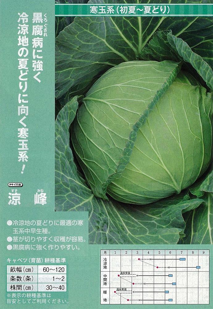 【キャベツ】涼峰〔タキイ交配〕/2千粒