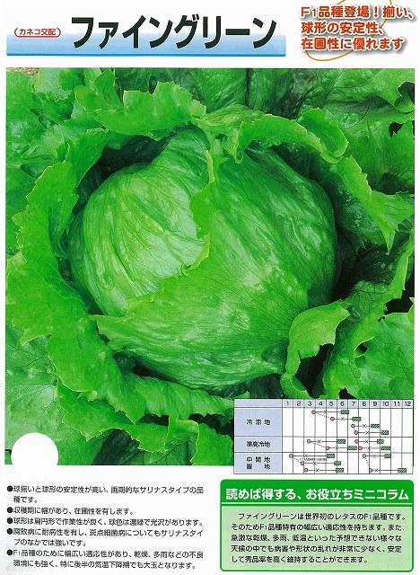 【レタス】ファイングリーン〔カネコ交配〕/5千粒コート