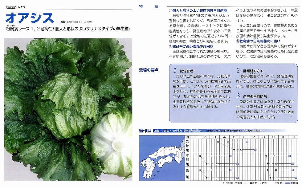 【レタス】オアシス〔タキイ育成〕/ペレットL5千粒