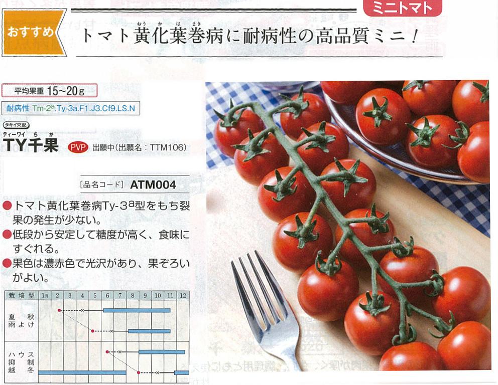 【ミニトマト】TY千果〔タキイ交配〕/1千粒
