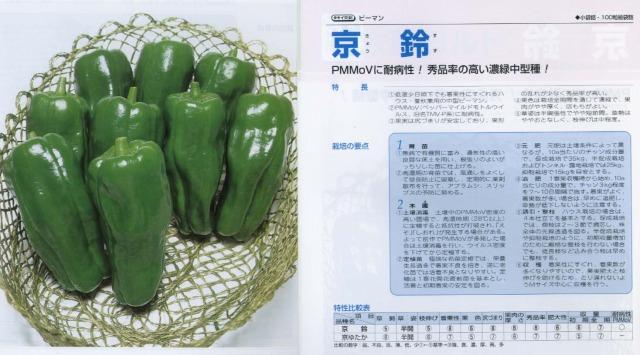 【ピーマン】京鈴〔タキイ交配〕/1千粒