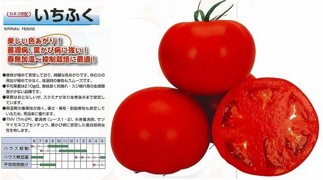 【トマト】いちふく〔カネコ交配〕/1000粒