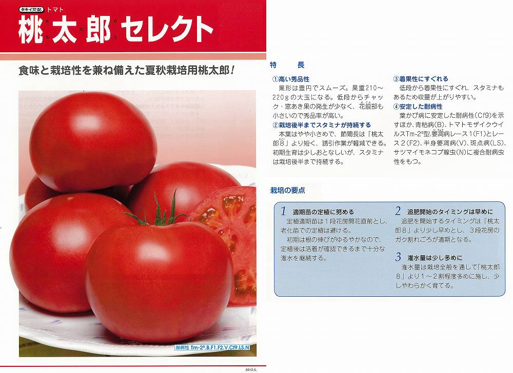 【トマト】桃太郎セレクト〔タキイ交配〕/1千粒