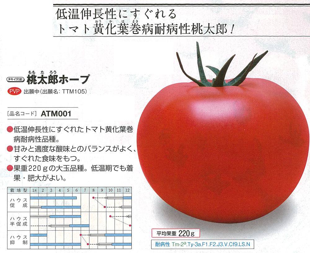 【トマト】桃太郎ホープ〔タキイ交配〕/1千粒