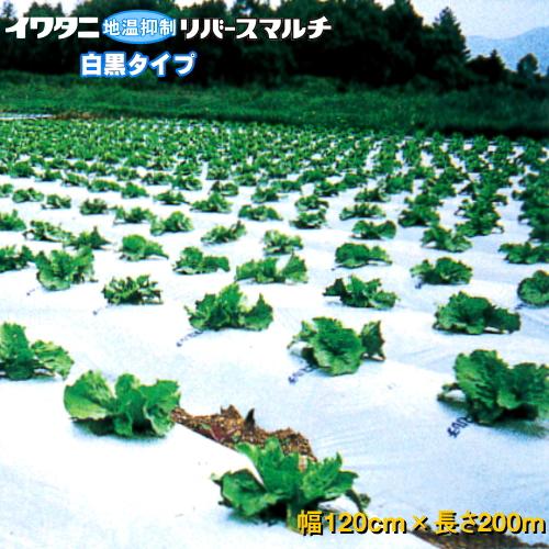 イワタニリバースマルチ(白黒マルチ) 厚み0.023mm 幅120cm×長さ200m 3本セット