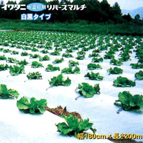 イワタニリバースマルチ(白黒マルチ) 厚み0.023mm 幅180cm×長さ200m 3本セット