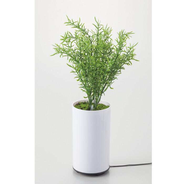 観葉植物型アロマ噴霧器 グリーンディフューザー B イシグロ 70091 アロマディフューザー aroma 加湿 【はこぽす対応商品】【コンビニ受取対応商品】