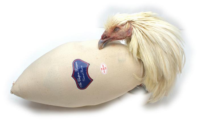 【】シャポン(去勢鶏) AOCブレス産 中付き 約3.0-4.0 不定貫Kgあたり15,800円(税込)【12月限定入荷・要予約】