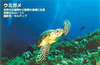 【新品/取寄品/代引不可】バックライトフィルム FP-M (表打ちタイプ) / 610mmx30m IJR24-51PD
