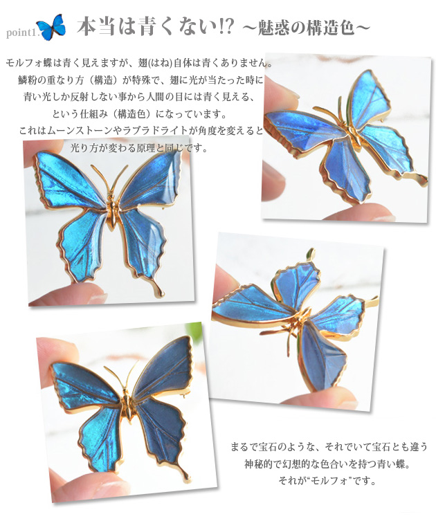 In the world with real butterfly wings one accessory * Butterfly brooch & pendant = blue