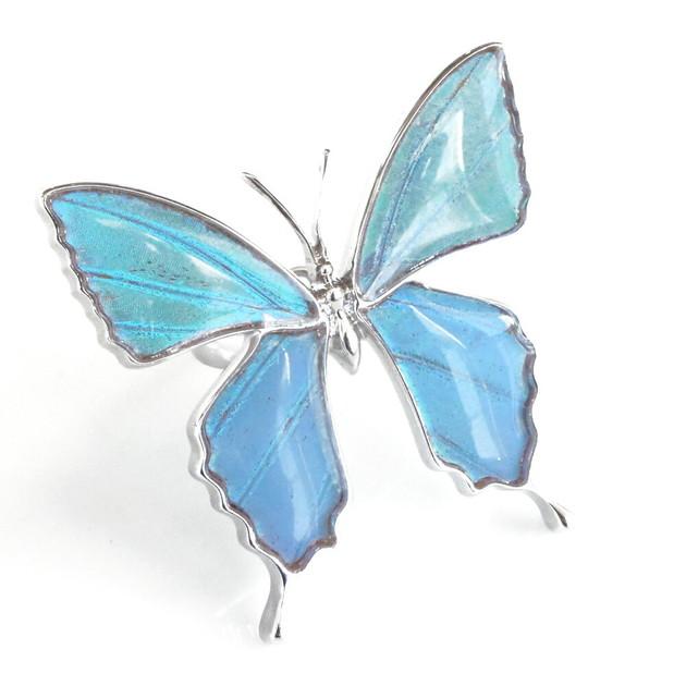 (Psyche/現品) 本物の蝶の翅 アゲハ蝶デザインリング=フリーサイズ= [ゼフィリティスモルフォ]