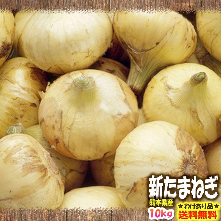 わけあり 熊本県産 新たまねぎ 10kg サラたま 玉ねぎ玉葱