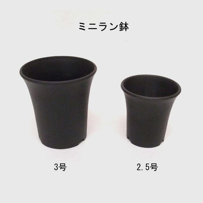 ミニラン 2.5 【1200個セット】外径 約72mm