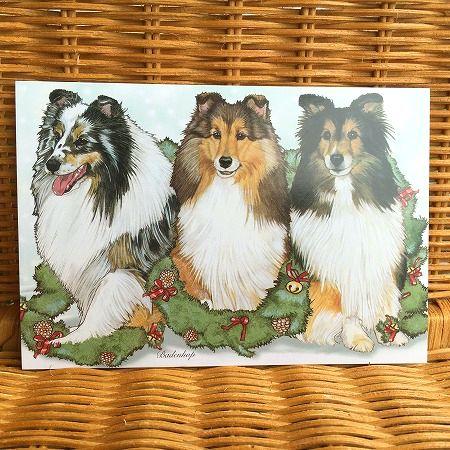 アメリカより直輸入 超激安 可愛い犬のクリスマスカード 可愛いワンちゃんのクリスマスカード シェルティ 人気ブランド Shetland Sheltie Sheepdog