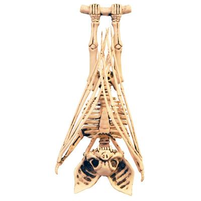 装飾品 リアル halloween 骸骨 ハロウィーン スケルトン ドクロ スカル ガイコツ デコレーション 最新 ホラーディスプレイ 飾り オブジェ 雑貨 ハロウィン あす楽12時まで 数量限定アウトレット最安価格 置物 バットスケルトン 怖い