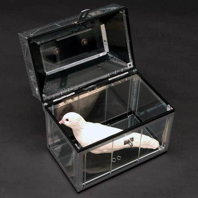 ●マジック関連●透明鳩出し箱●V5641