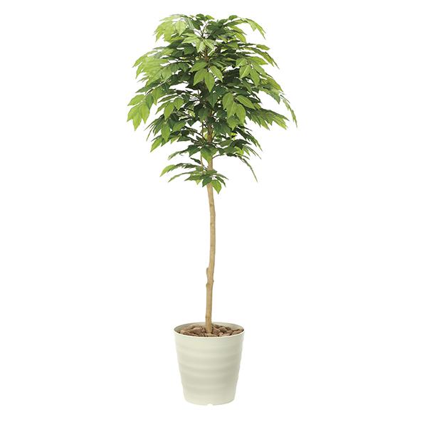 【メーカー直送・大感謝価格 】ケヤキ1.6 901A600 光触媒人工植物 光の楽園 2019 W65×D60×H160cm