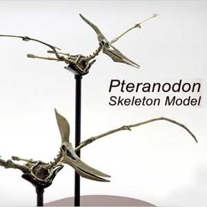 【メーカー直送・大感謝価格 】プテラノドン スケルトンモデル 70108 FDS608
