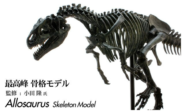【メーカー直送・大感謝価格 】恐竜 アロサウルス スケルトンモデル FDS605/BK 70105