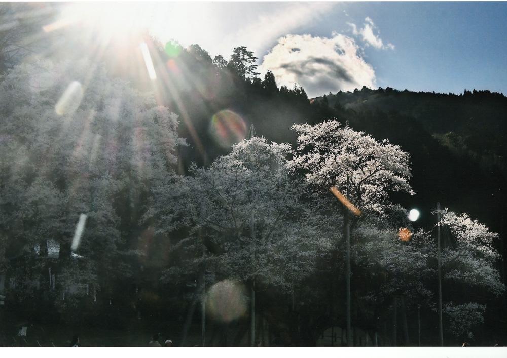 【大感謝価格 】奇跡の写真 秋元隆良『薄墨桜ー(山の神)』