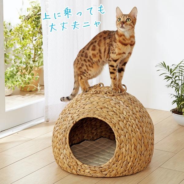 ペットちぐら 猫 ドームハウス 2017夏