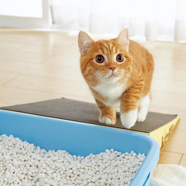 にゃんこスロープ シングル 猫 シニア 介護 ダンボール 国産 ペピイオリジナル