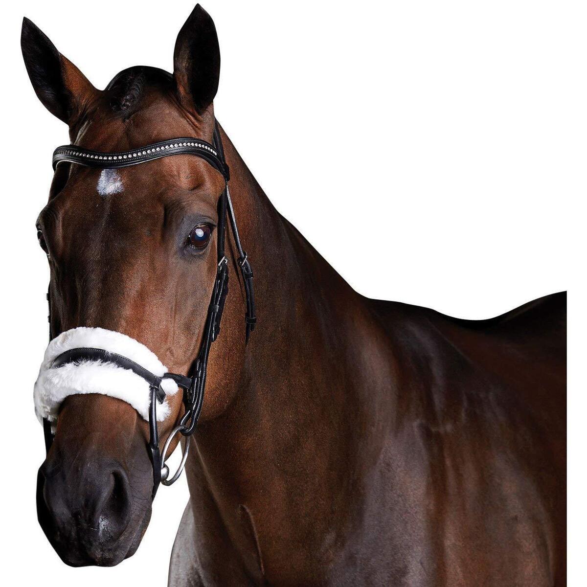 馬装具 馬具 乗馬用品 頭絡 調教 本物 カレッジエイト Collegiate 馬用 レザー 出群 Comfitec シープスキン 海外直送 乗馬 ホースライディング ブライドル