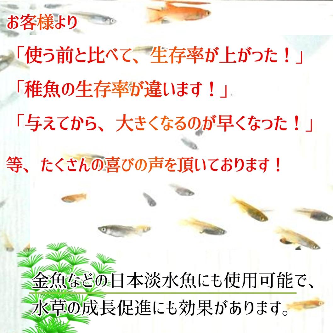 餌 金魚 稚魚