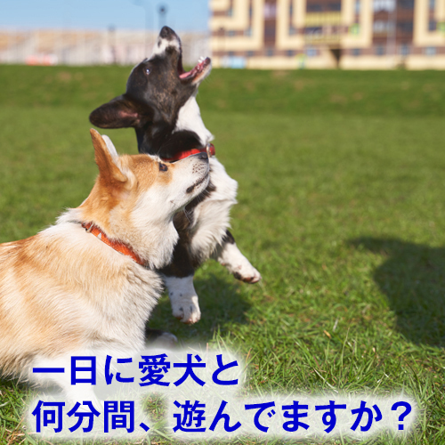 一日に、何分愛犬と遊んでますか?ひっぱり合って、ポイっと投げて・中、大型犬用ロープのおもちゃ☆ロープの真ん中を噛むと可愛い音が鳴ります♪ 【犬 おもちゃ】スーパーロープ Lサイズ (犬用品 いぬ ペット ペットグッズ ペット用品 ドッグトイ オモチャ 玩具 ロープ 紐 スクィーカー 鳴り笛 中型犬 大型犬 歯磨き ハミガキ はみがき デンタルケア 口臭 対策 歯垢 歯石 噛む 柴犬 コーギー フレブル)