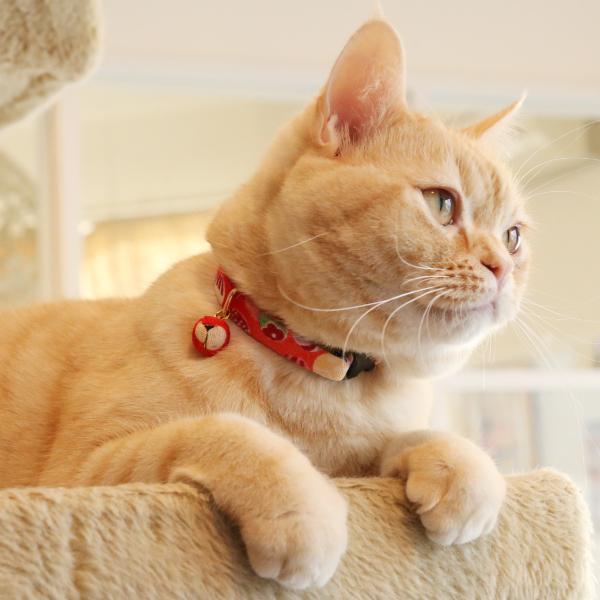 ネコ用首輪 紙風船 和柄<迷子札付き仕様>鈴 和柄 和風